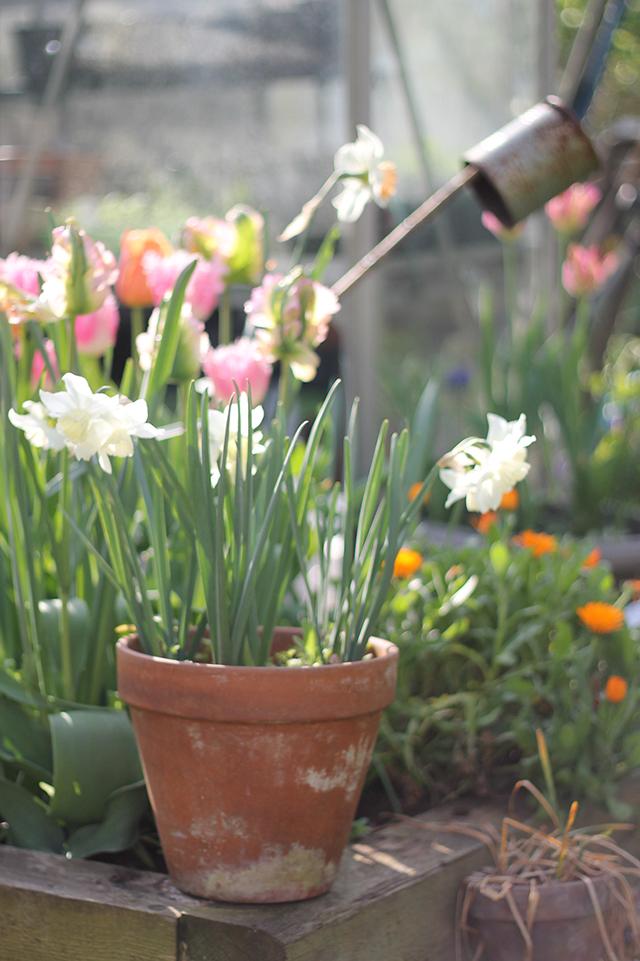 BLOG_Spring_flowers_5