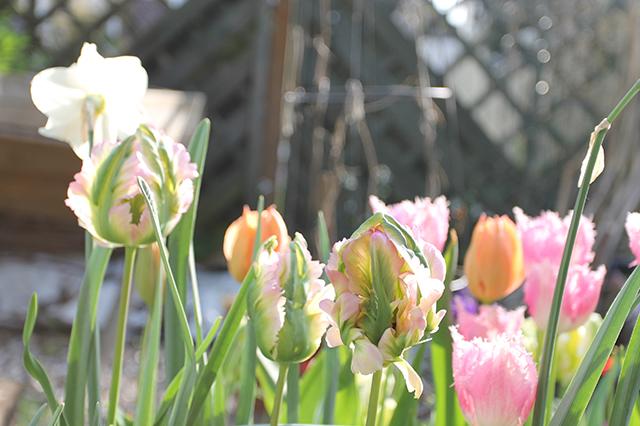 BLOG_Spring_flowers_8