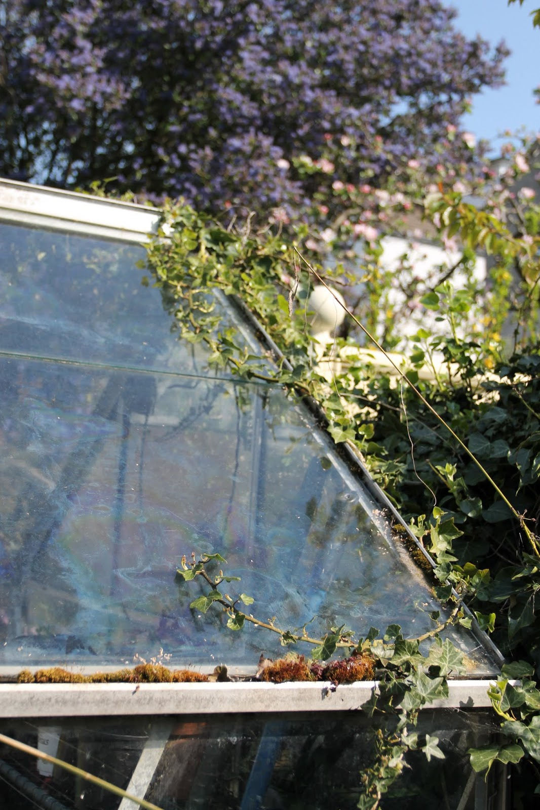 Greenhouse_4