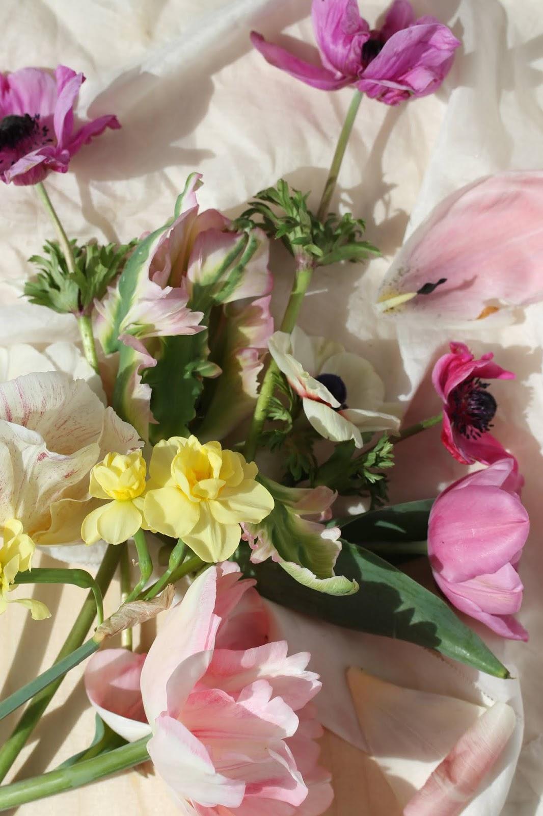 Macro_flowers_1