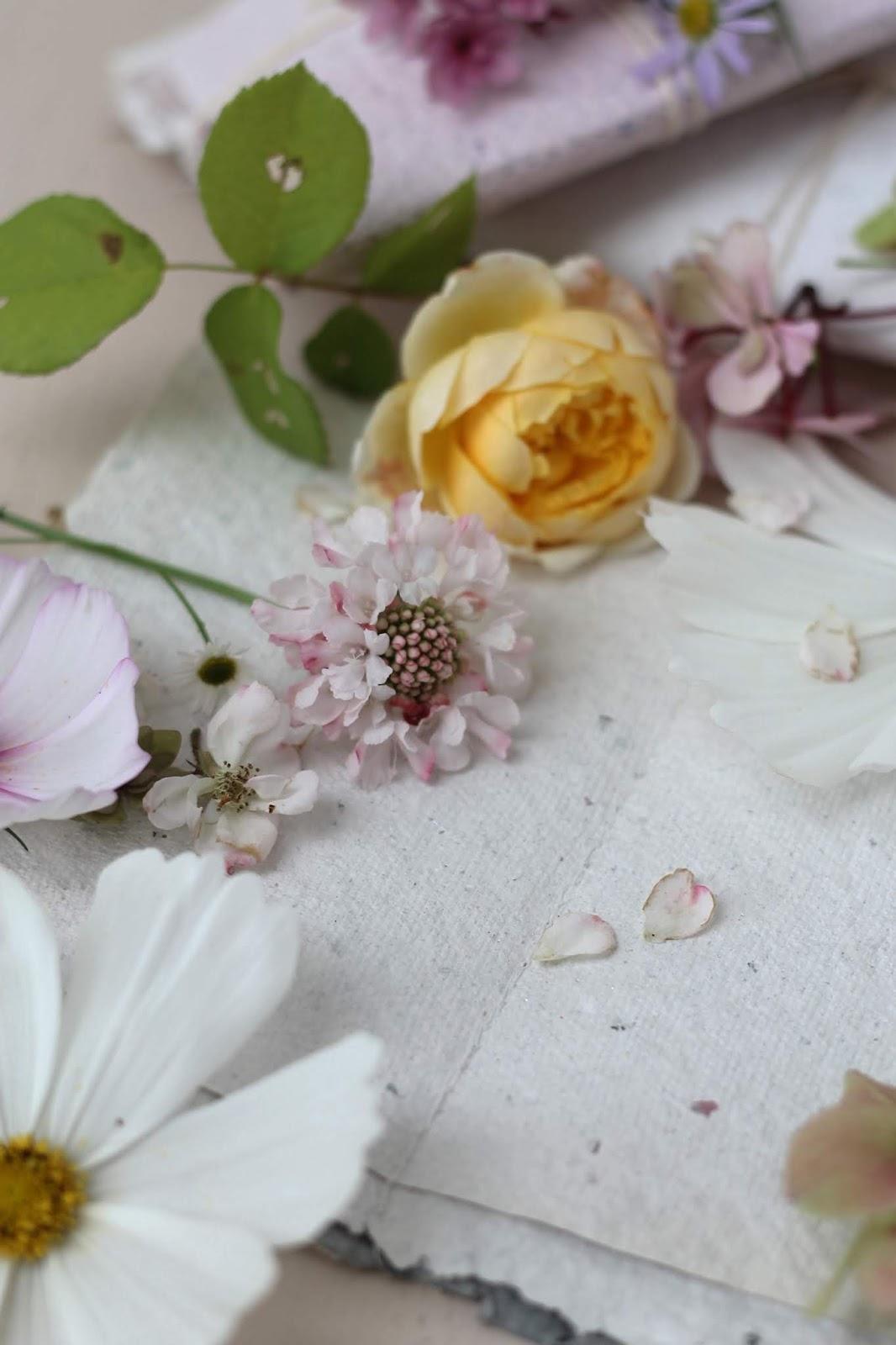 Pressed_Flowers_10