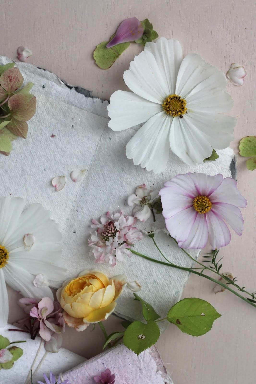Pressed_Flowers_2
