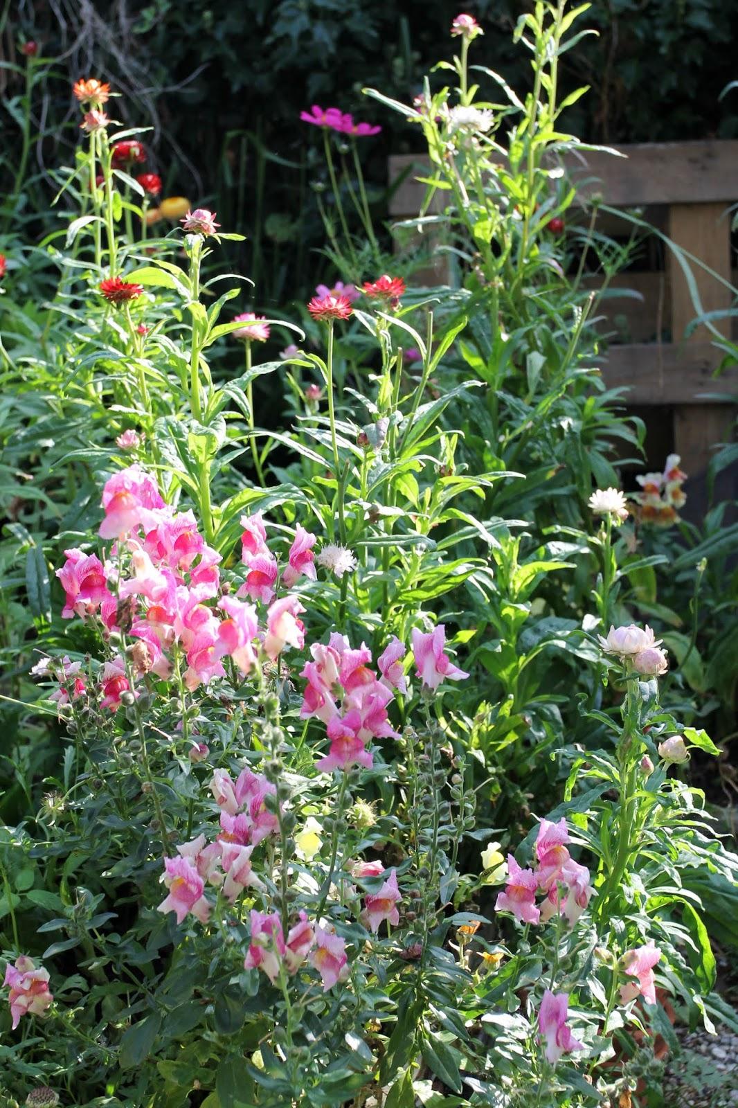Summer_garden_7