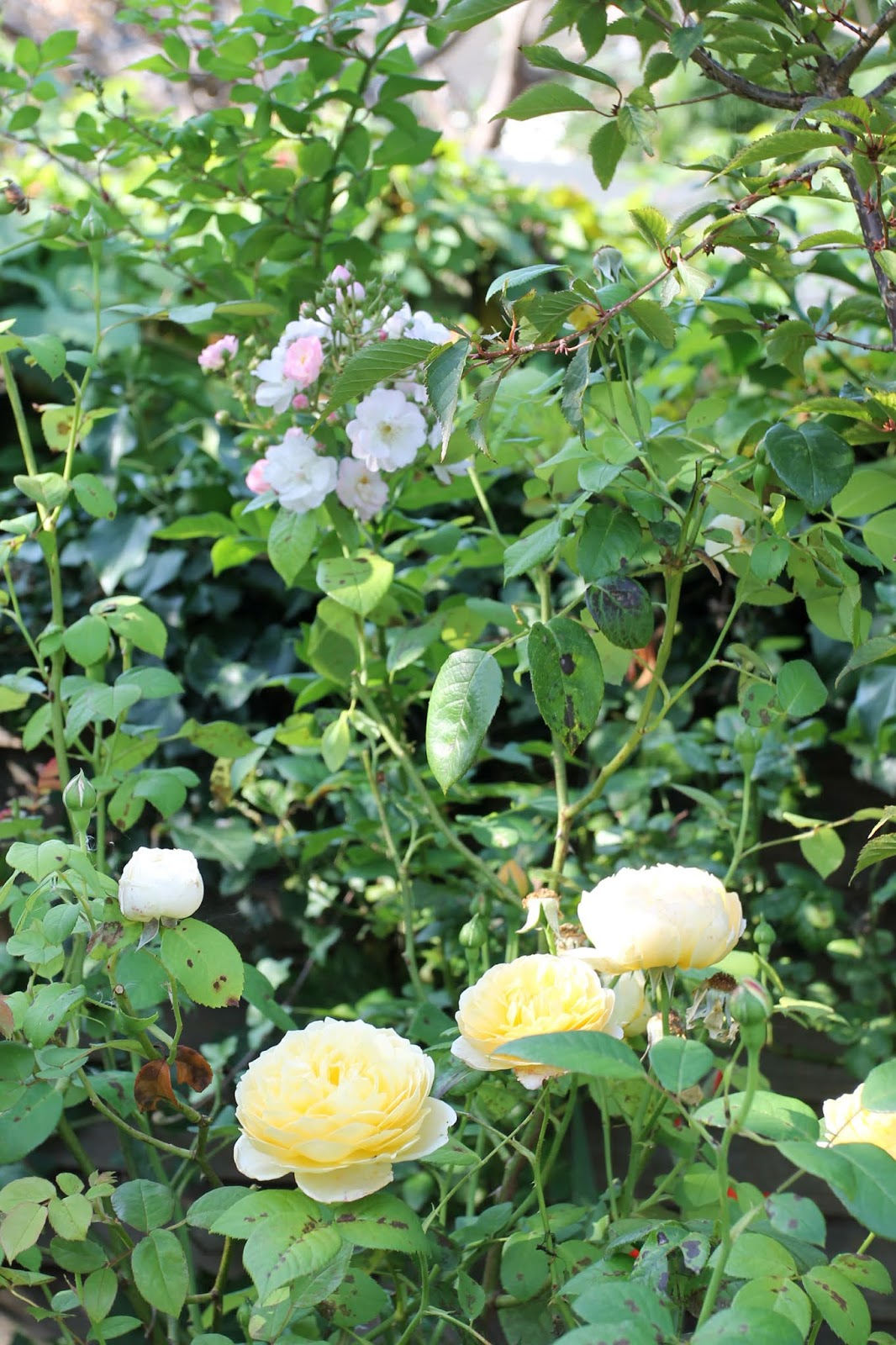 Summer_garden_9