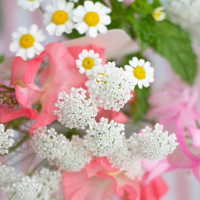 Lotts and Lots | Fresh Flowers