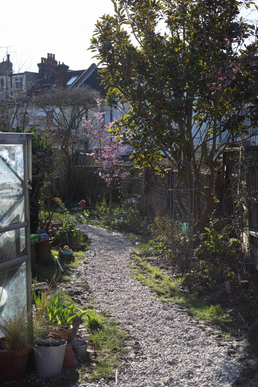 Gravel path and blossom tree