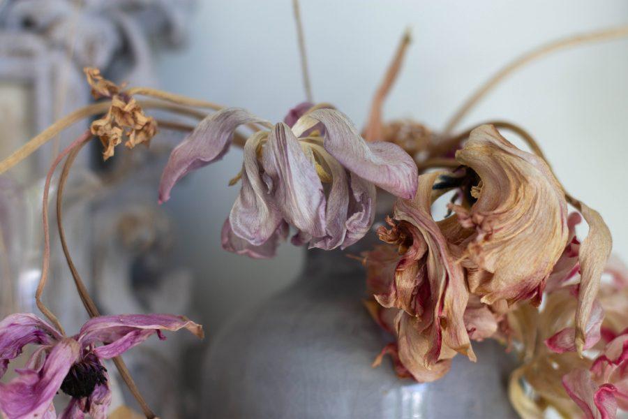 elegantly dried flowers