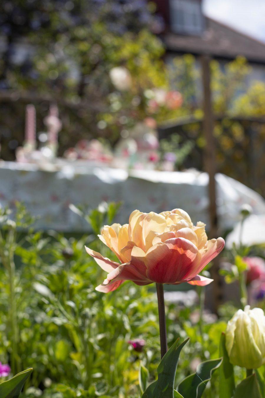 Tea_Party_in_the_garden