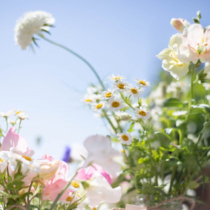 English_Summer_Flowers