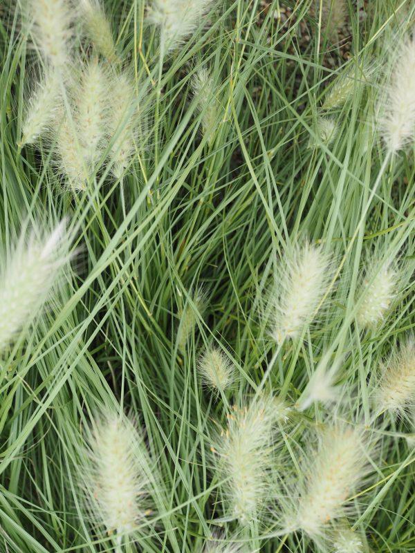 grasses_Beth_Chatto_gardens